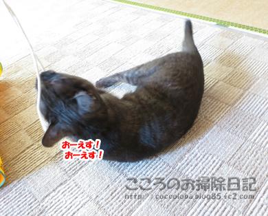 ributohimo1-2012_20120131183541.jpg