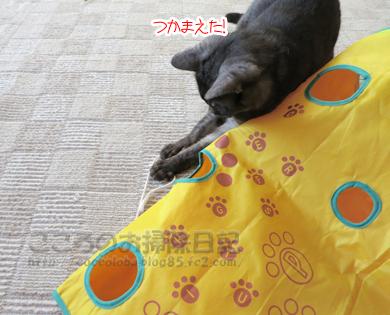 ributohimo16-2012.jpg
