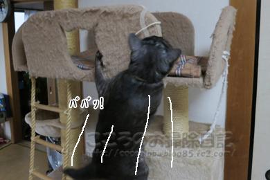 ributohimo3-2012.jpg
