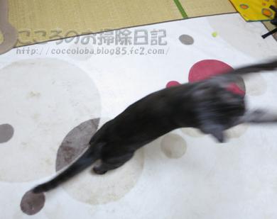 ributohimo6-2012.jpg