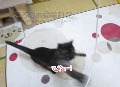 ributohimo7-2012.jpg