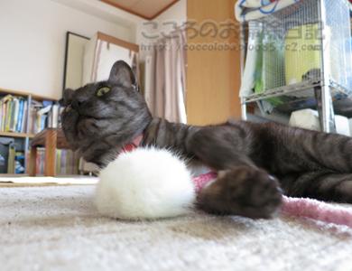 ributoomotya001-2012.jpg
