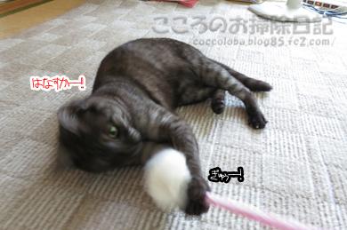 ributoomotya004-2012.jpg