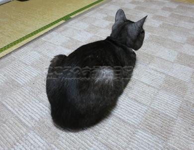 ribuushiro03-2012.jpg