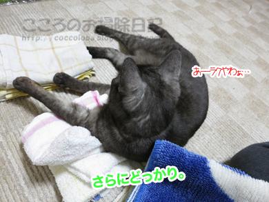 sentakumonoribu001-2012.jpg