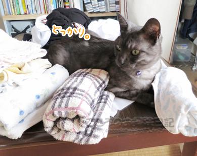 sentakumonoribu002-09-2012.jpg