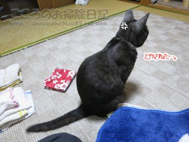 sentakumonoribu002-2012.jpg