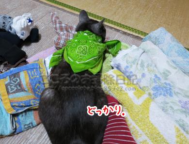 sentakumonoribu003-2012_20120612004230.jpg
