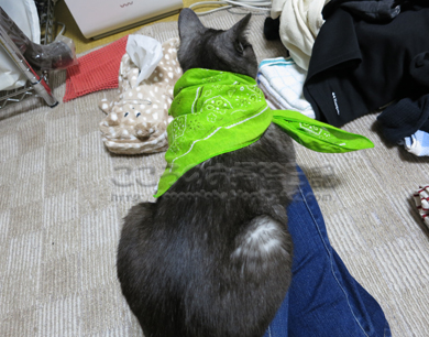 sentakumonoribu005-2012_20120612004230.jpg