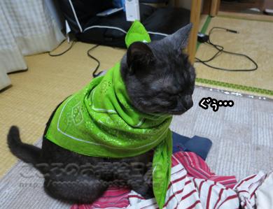sentakumonoribu008-2012.jpg