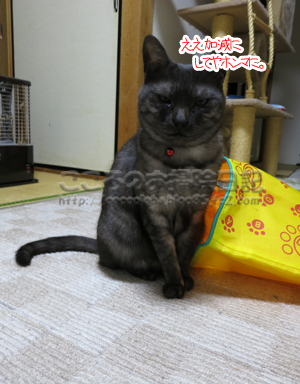 shakatonribu3-2012.jpg