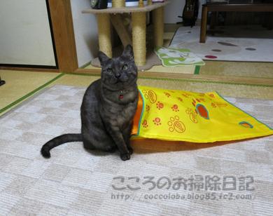 shakatonribu5-2012.jpg