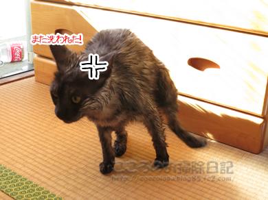 shanpu-ribu001-09-2012.jpg
