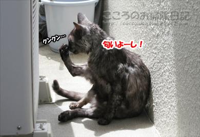 shanpu-ribu008-07-2012.jpg