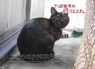 shikaihiroiribu-2011.jpg