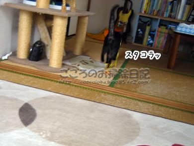 sutakoraribu-2011_20111128234206.jpg