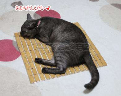 takemattoribu001-2012.jpg