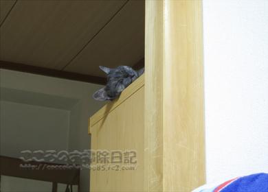 tansuueribu008-07-2012.jpg