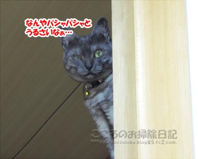 tansuueribu011-07-2012.jpg