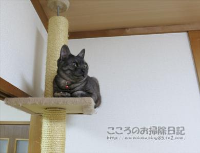 tawa-ribu02-2012.jpg