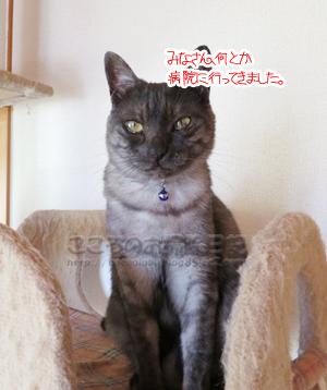 tawewribu003-10-2012.jpg