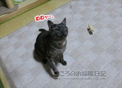 tegusuribu003-2012.jpg