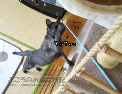 texitexiribu-2011_20111121231552.jpg
