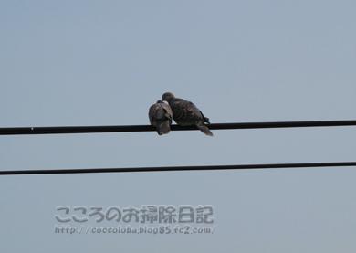 torisan1-2012_20120413165300.jpg