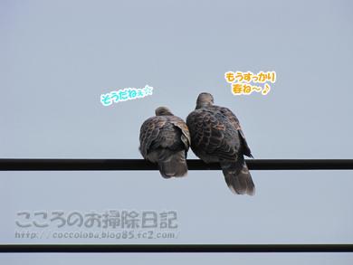 torisan2-2012_20120413165259.jpg