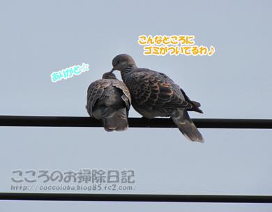 torisan3-2012_20120413165258.jpg