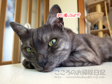 tsukueueribu004-07-2012.jpg