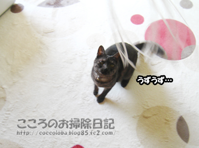 uzuzuribu-2011.jpg