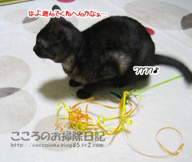 wakuwakuribu-2011.jpg