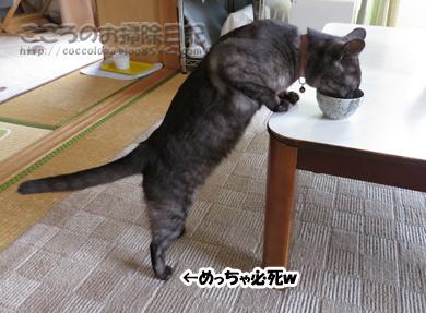 yo-gurutoribu003-2012.jpg