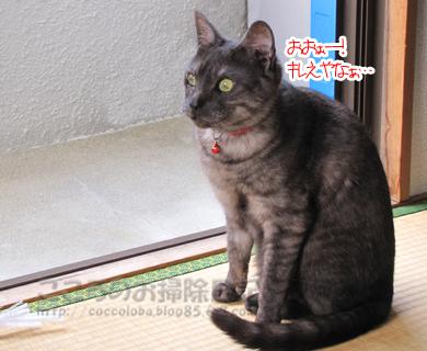 yuhiribu001-2012.jpg