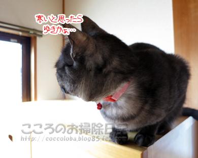 yukiribu1-2012.jpg