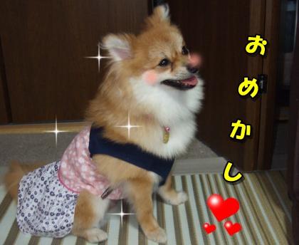 20110730_2.jpg