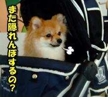 20110808_7.jpg