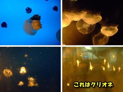 20110808_9.jpg