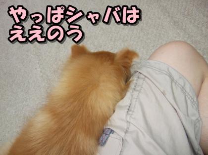 20110814_5.jpg