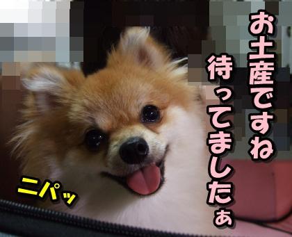 20110827_7.jpg