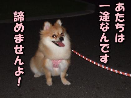 20110907_5.jpg