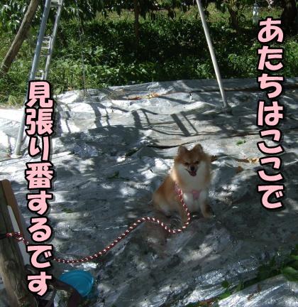 20110909_7.jpg