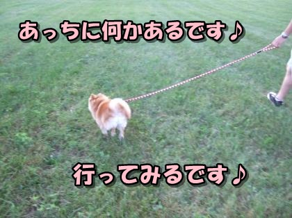 20110915_12.jpg