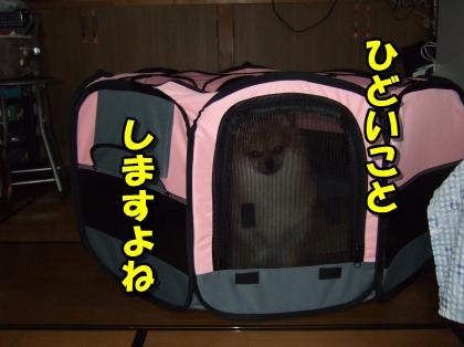 20110921_10.jpg