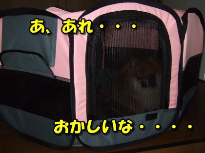 20110921_11.jpg