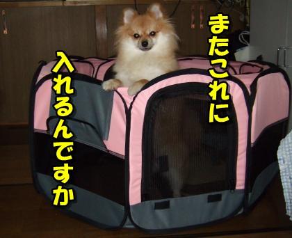 20110921_9.jpg
