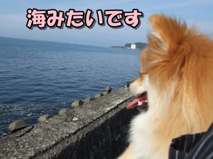 20110924_10.jpg