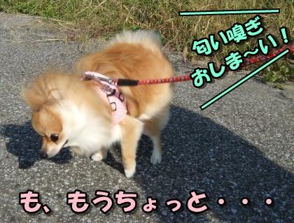 20110924_5.jpg