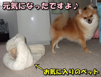 20110930_1.jpg